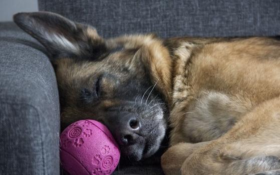 Comment occuper son chien au quotidien ?